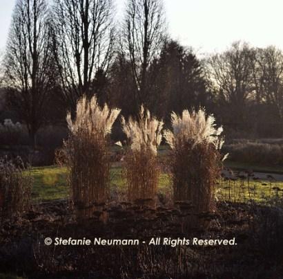 Flexibility 3 © Stefanie Neumann - All Rights Reserved.