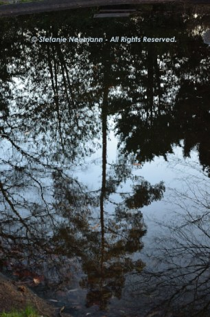January Reflections 3 © Stefanie Neumann - All Rights Reserved.