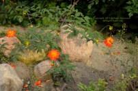 Autumn Stars 3 © Stefanie Neumann - All Rights Reserved.