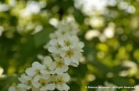 Wild Encounters LCA Osdorfer Feldmark 20 © Stefanie Neumann – Kokopelli Bee Free - All Rights Reserved; #KBFWalk #KBFPhotography