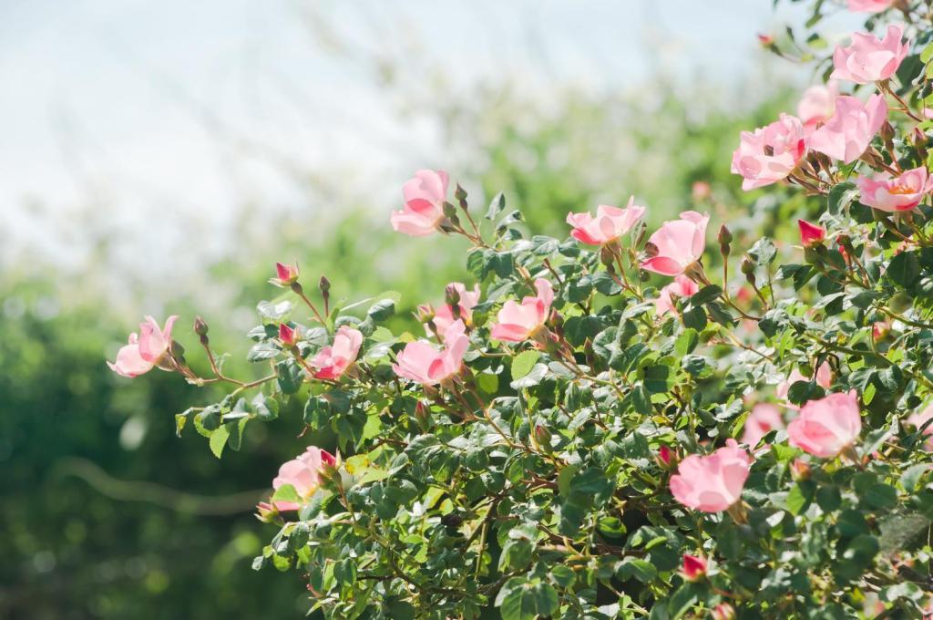 空に向かって伸びるバラ