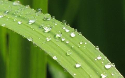 雨だれと葉っぱ