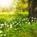 春の花と太陽と自然の画像