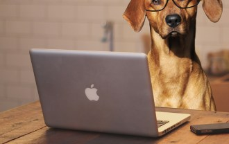 パソコンとメガネをかけた犬の画像