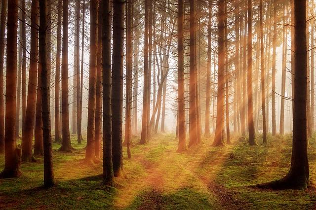 森林と光の画像