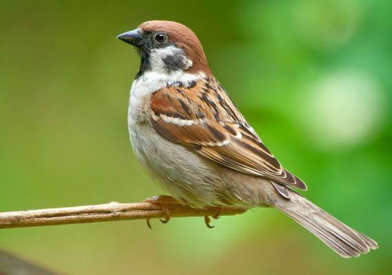 Птичья математика