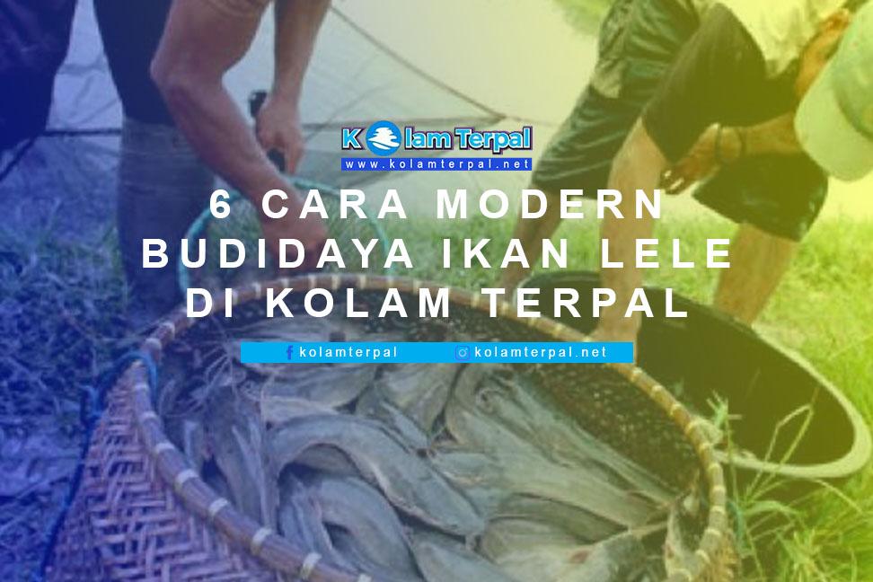 """6 Cara """"MODERN"""" Budidaya Ikan Lele di Kolam Terpal"""