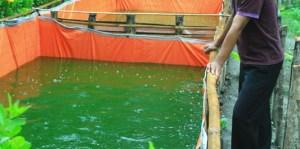 air-kolam-lele