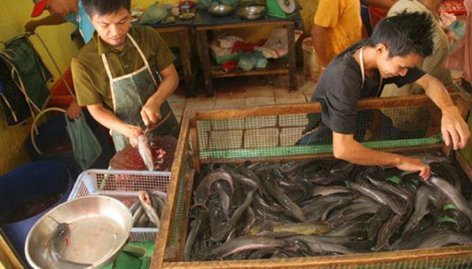 Download 95 Gambar Ikan Lele Segar HD Terbaru