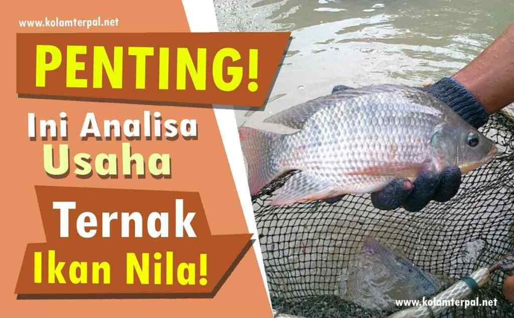 PENTING! Ini Analisa Usaha Ternak Ikan Nila!