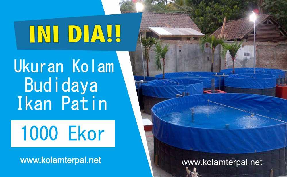 Ukuran Kolam Budidaya Ikan Patin 1000 Ekor