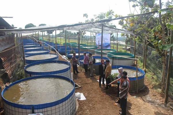 #1 Rahasia Sukses Budidaya Ikan Gabus di Kolam Terpal!