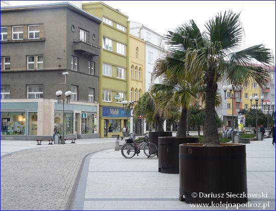 Opawa - palmy w centrum miasta