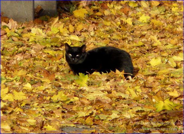 Głogówek - kot wylegujący się na stacji kolejowej