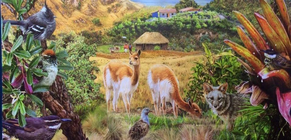 Birding Peru Tours, Birdwatching Holidays and Bird photography Worldwide