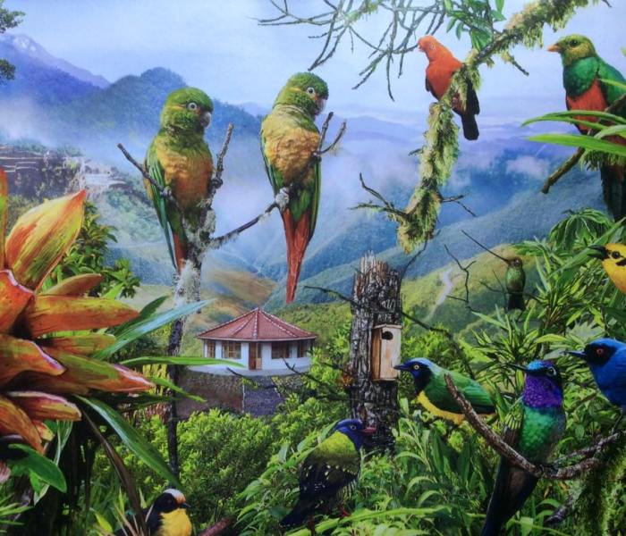 Birding Peru. ABC illustration of birds of Peruvian Andes