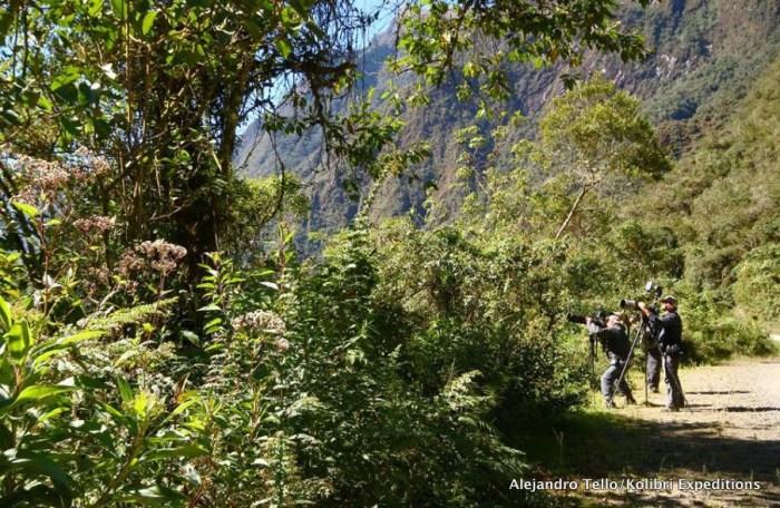 Birding Satipo Road. Photo: Alejandro Tello