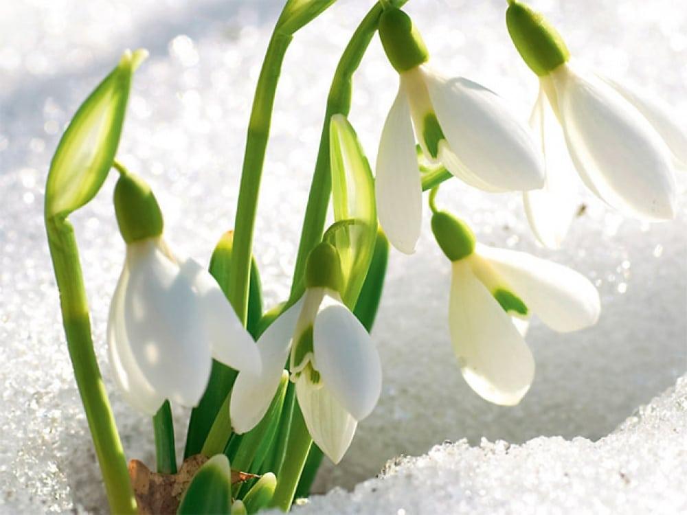 15 фотографій, в яких пробивається весна (6)