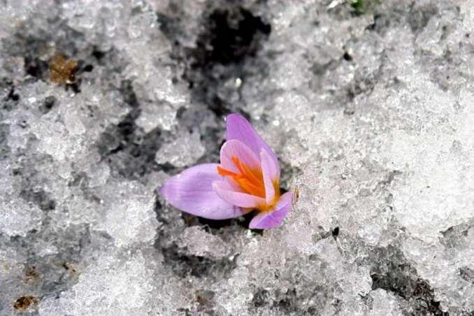 15 фотографій, в яких пробивається весна (7)