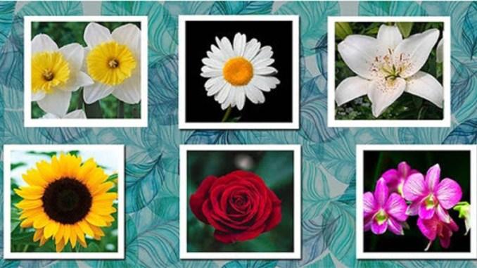 Квітковий гороскоп: яка ти квітка за датою народження