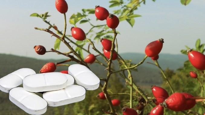 Звичайна шипшина допомагає краще, ніж парацетамол! Рецепт чаю, який ставить на ноги