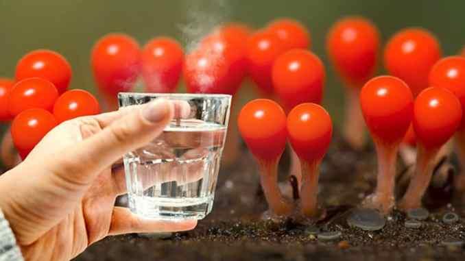 Яку воду пити зранку: гарячу, теплу чи холодну? Це важливо для вашого здоров'я!