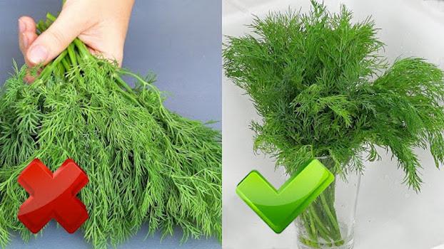 Зелень залишається СВІЖОЮ до 2-х місяців! Як правильно зберігати кріп (зелень)