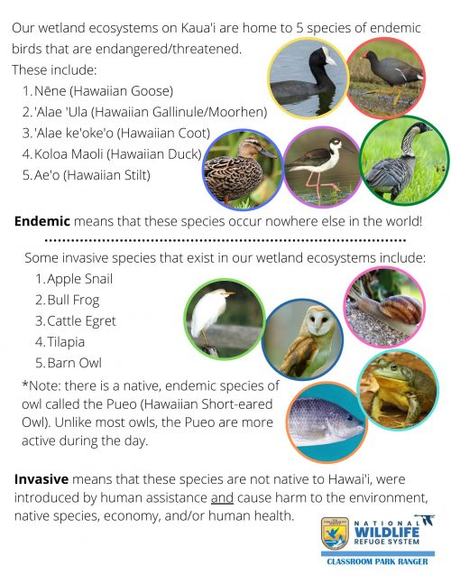 Worksheet that explains endemic vs invasive species, and examples found in Hawaii's wetlands. Worksheet provided by the National Wildlife Refuge Systems.