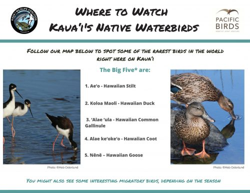 Infographic of where to find Kauai's native waterbirds. Made by Pacific Birds Habitat Joint Venture.