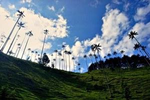 El último boletín de viaje para Salento y el Valle de Cocora