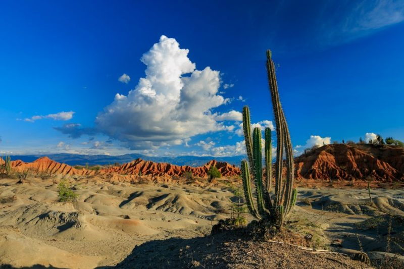 Kaktus Tatacoa-Wüste