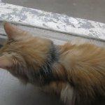 Как проявляется аллергия у кошки