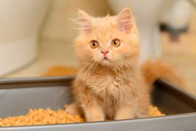 приучение котенка к лотку
