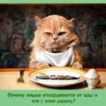 Почему кошки отказываются от еды и что с этим делать?