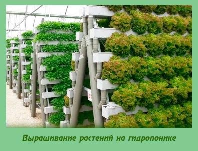 Выращивание растений на гидропонике