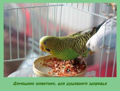 Домашнее животное, для душевного здоровья