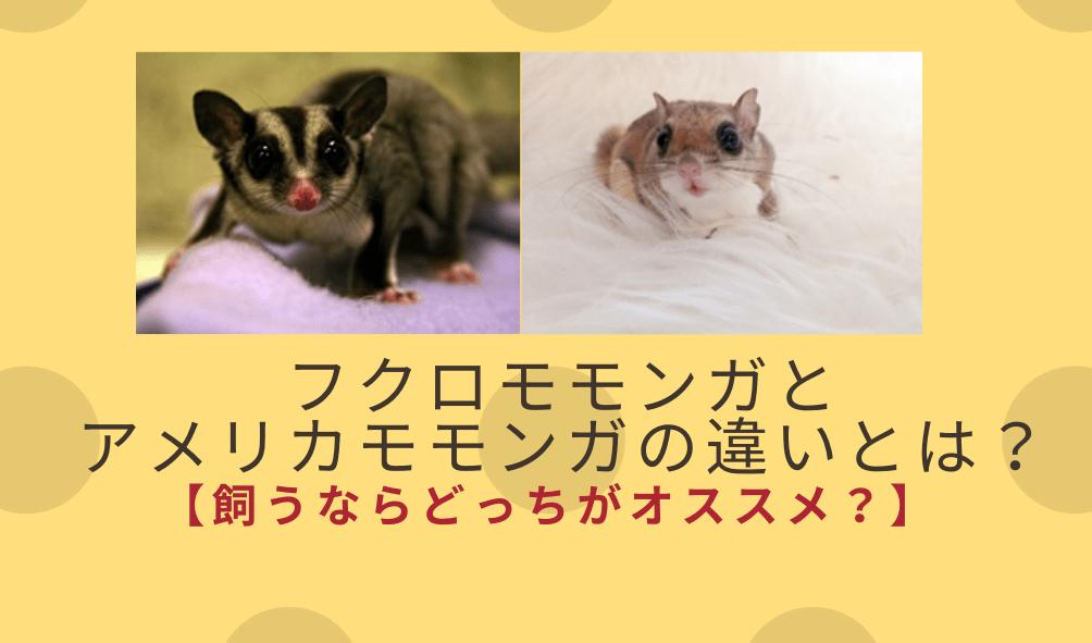 フクロモモンガとアメリカモモンガの違いとは?【飼うならどっち?】