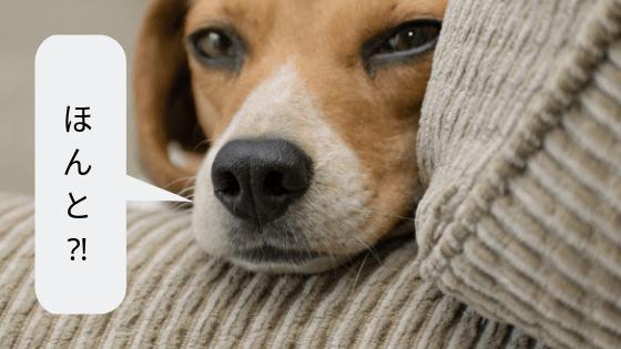 犬の顔画像