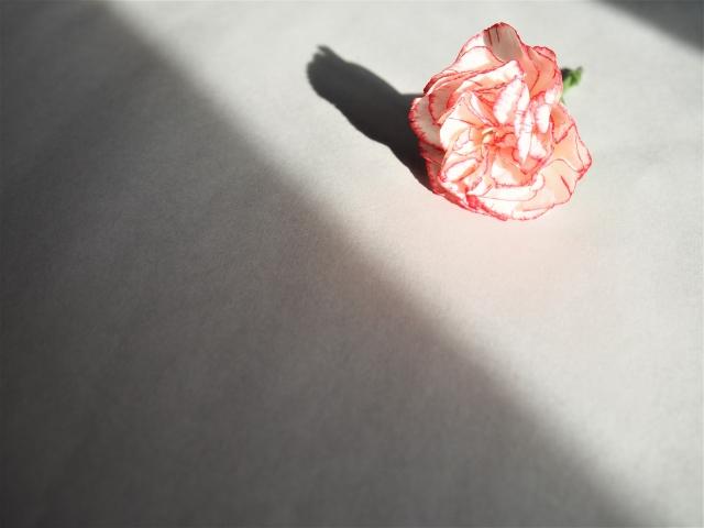 花に光が差し込んでいる画像