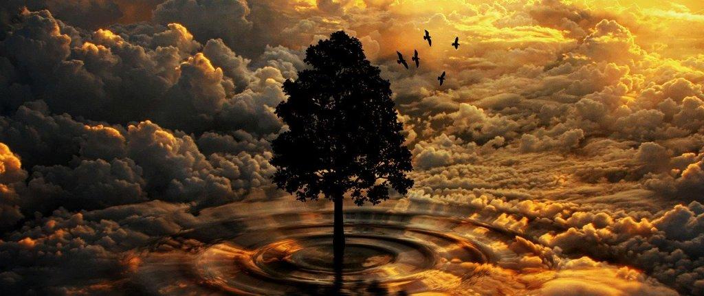 夕焼け空と一本の木