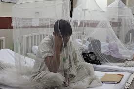 Bolezni komarjev