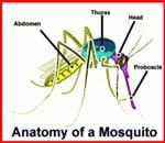 Vse o komarjih