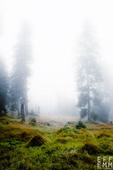 "Frank Meinel ""Bäume im Nebel I"""
