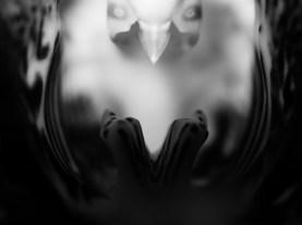 Sven Jankowski »Orchidee s/w«
