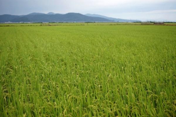 にこまる 特別栽培米