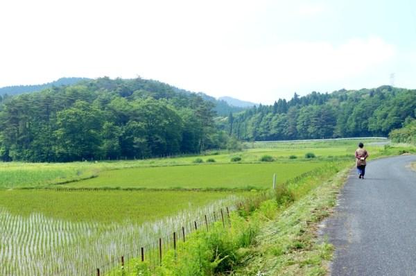 石川農園圃場