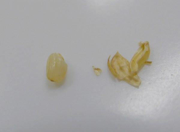 玄米と籾殻