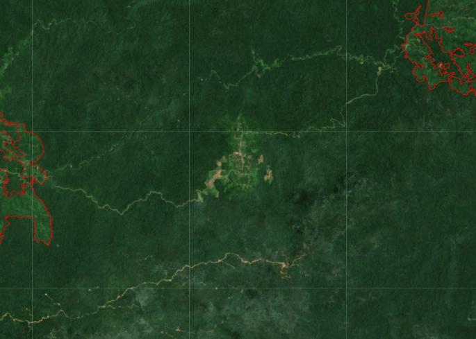 Deforestasi Hutan Alam Untuk Perkebunan Sawit di Kabupaten Tolitoli