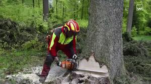 Anwohnerinitiative in MA-Neckarau wehrt sich gegen Baumfällaktion für Parkplätze