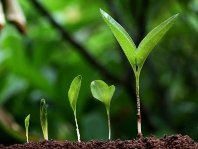 Подтверждение уникальных свойств производимого органического удобрения «САМОРОД»